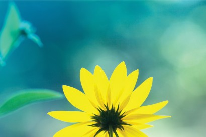 bloem.jpg